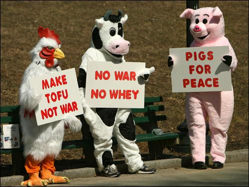 File:Barnyard Trio for Peace.jpg